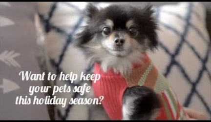 Holiday Safety Tips for Cats and Dogs