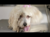 Homeless Dog Gets Makeover That Saves Her Life! – Maggie