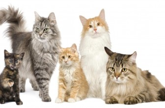 House Cats and Their Impact On Our Lives – Documentary