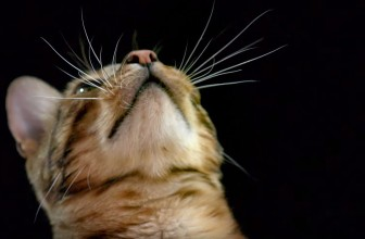 How do Cats Use Their Whiskers? Slow-Motion – Cats Uncovered – BBC