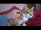 How to Get Your Cat to Be More Affectionate