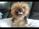 Smiling Dogs Video