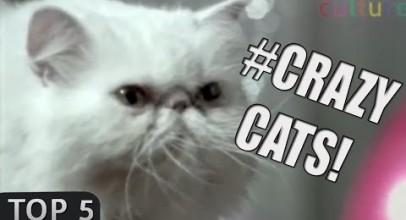 Top 5: Crazy CATS commercials!