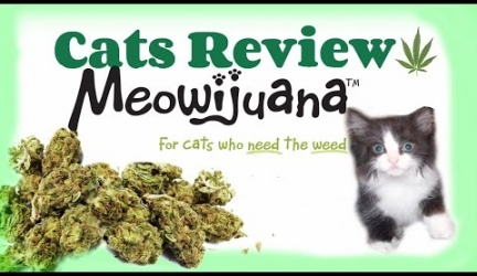 Cats Review: MEOWIJUANA Meowi-Waui Catnip.