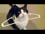 TRY NOT TO LAUGH at SUPER FUNNY ANIMAL VIDEOS