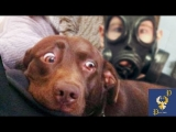 Funny Dogs Scared of Masks – Part 3 Video