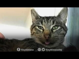 Terminally Ill Feral Cat Gets a Home for Christmas