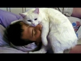 CUTE CATS MORNING CALL THEIR OWNER