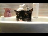 """""""Cats Who Want Some Privacy Compilation""""    CFS"""