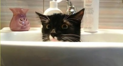"""Cats Who Want Some Privacy Compilation"" 
