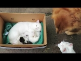 Adorable, Sleepy Kittens Meet Their Cat Daddy