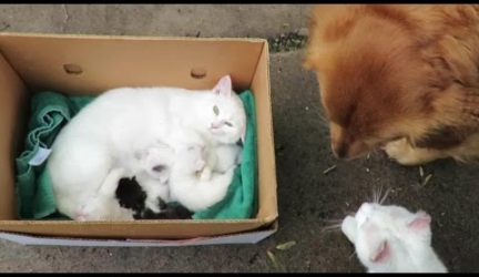 Adorable, Sleepy Kittens Meet Their Cat Daddy