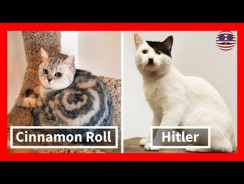 Cats With The Craziest Fur Markings Ever Video
