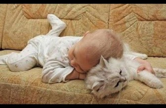 Adorable Cats and Babies Cuddling