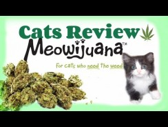 Cats Review: MEOWIJUANA Meowi-Waui Catnip.