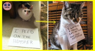 10+ Asshole Cats Being Shamed For Their Crimes