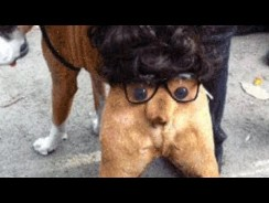 I Bet You Can't STOP Laughing – Funny DOGS and CATS Halloween Costumes