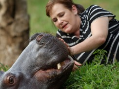 Jessica the Hippo Raised by Human Parents