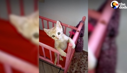 Kitten Acts Like Real Baby Video