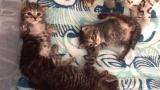 Kitten Family Reunited