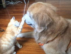 Kitten Growing up with Dog Best Friend Video