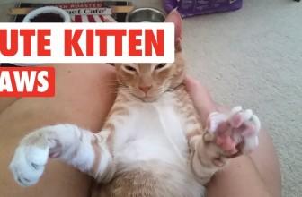 Kitten Paws So Cute You'll Die   Cute Kitten Videos 2017