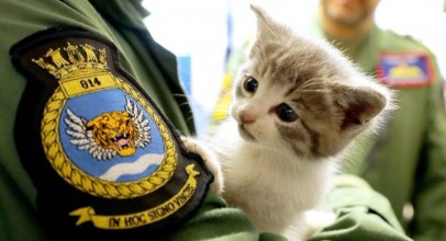 Kitten Survives 300-Mile Ride In Military Pilot's Car Bumper Newsy