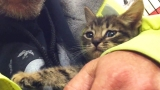 Kitten Trapped in Storm Drain Rescued after 33 Hours!