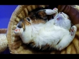 Kittens and Cats sleeping in wierd, awkward but funny and cute positions 2017