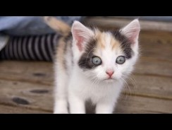 Kittens see / do things for the first time – Funny and cute cat compilation