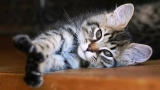 """""""Kittens Struggling to Stay Awake Compilation"""""""
