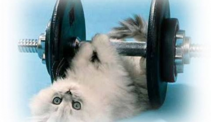 Kitty Cat Exercise