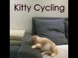 Kitty Dreaming Riding a Bicycle and Crashes