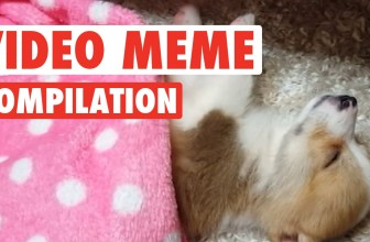Know Your Pet Collective Meme Video Compilation 2016