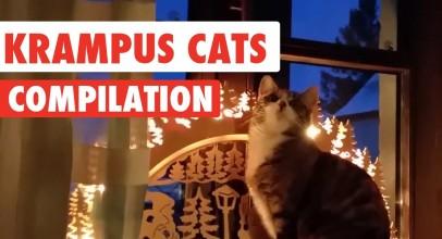 Krampus Cats Video Compilation 2016