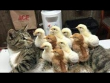 LAUGH GUARANTEED – The best ANIMAL COMPILATION of this month