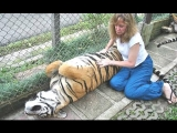 Lions, Tigers And Cheetahs Also Like Cuddling