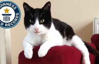 Loudest Purring Cat – Guinness World Records
