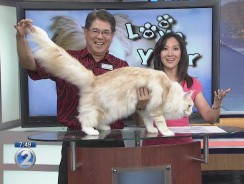 Love Your Pet: Maine Coon Cats