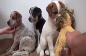 Man Keeps Promise to Dead Dog to Save Her Frightened Puppies