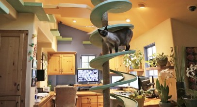 Man Turns His House Into Indoor Cat Playland