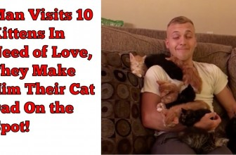Man Visits 10 Kittens In Need of Love, They Make Him Their Cat Dad On the Spot