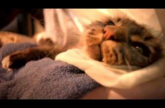 Mars Temptations 'Laundry'