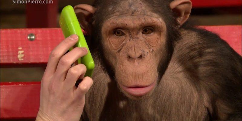 Monkeys react to magic video