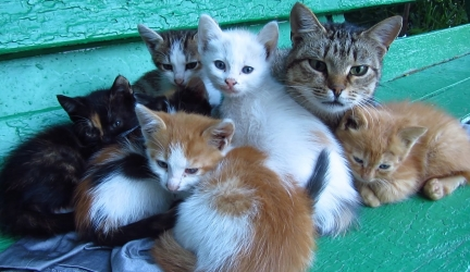 Mother Cat With Kittens and Two Feral Puppy in the Bushes