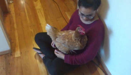 My chicken likes to cuddle