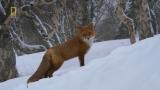 National Geographic Documentary -Animal world of Kamchatka Peninsula – Wildlife Animal