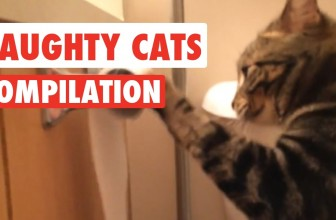 Naughty Cats Video Compilation 2016