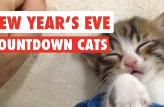 New Year's Eve Countdown Cats Video Compilation 2016