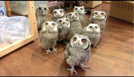 A Funny Owls And Cute Owls Compilation